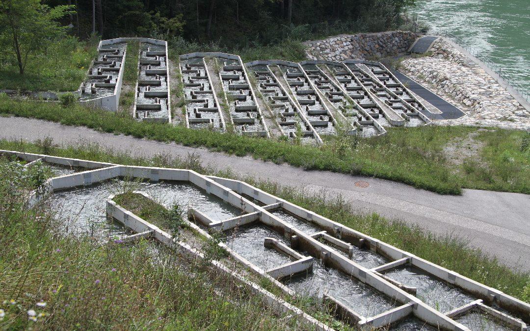 Fischtreppe: Wie Beton das Ökosystem von Flüssen rettet